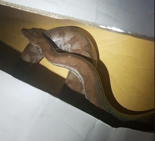 Wąż został schwytany przez eko patrol