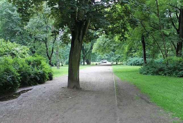 W Warszawie w ciągu kilku lat wycięto blisko 160 tys. drzew!