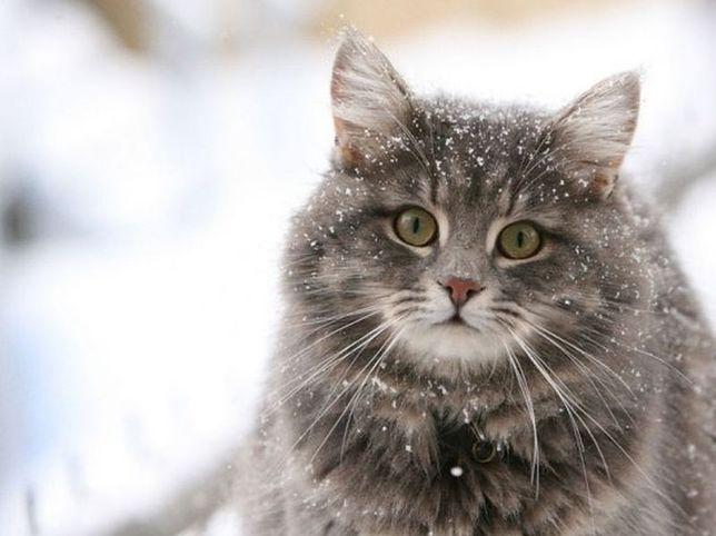 Bez naszej pomocy koty mogą nie przetrwać zimy [NASZ APEL]