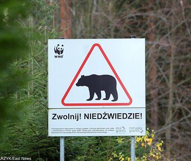 Zaatakowany przez niedźwiedzia trafił do szpitala