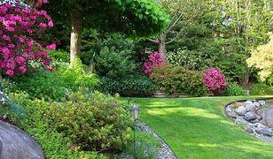 Najpopularniejszy nawóz, który wzmocni rośliny w twoim ogrodzie