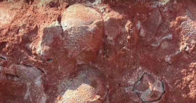 W Chinach robotnicy przypadkowo odkryli 30 jaj dinozaurów. Znalezisko liczy 130 mln lat