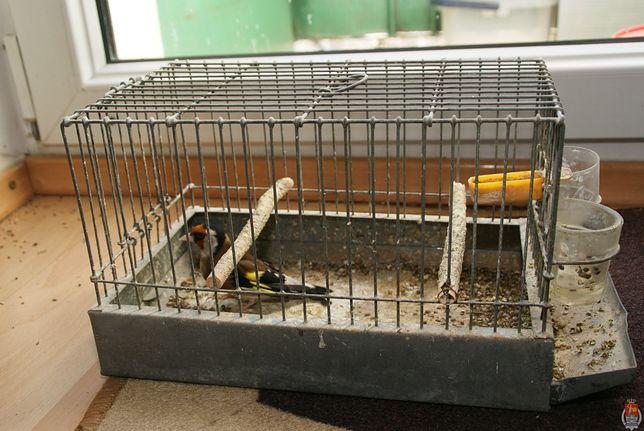 """Łapał chronione ptaki, bo """"lubił ich śpiew"""""""