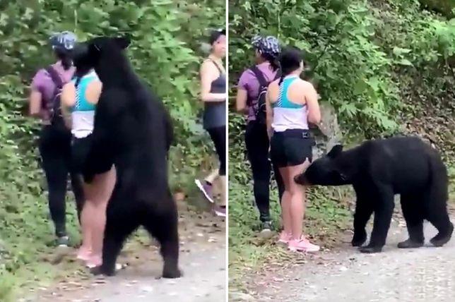 Niedźwiedź vs. turyści