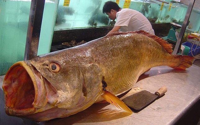 """W Chinach występuje rzadki gatunek. Mówi się o niej """"pieniężna ryba"""""""