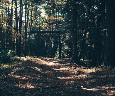 Najbardziej przerażające lasy. Strach do nich wchodzić