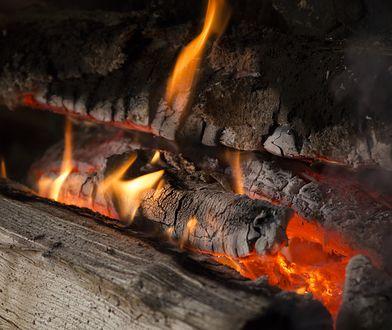 Wartość opałowa drewna. Czym najlepiej palić w kominku?