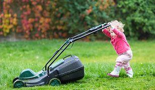 Zakładanie trawnika jesienią. Czy warto?