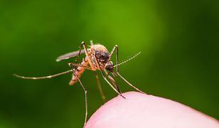 Śmiertelny wirus w Grecji. Gorączka Zachodniego Nilu przenoszona przez komary.