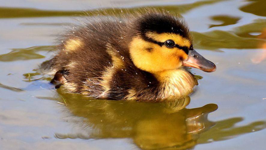 DuckDuckGo publikuje bazę stron śledzących. (fot. Pixabay)