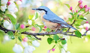 Niebieski ptak w przyrodzie.