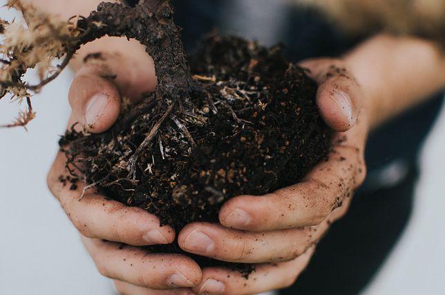 Ogród dla niecierpliwych. Wybieramy rośliny, które urosną błyskawicznie