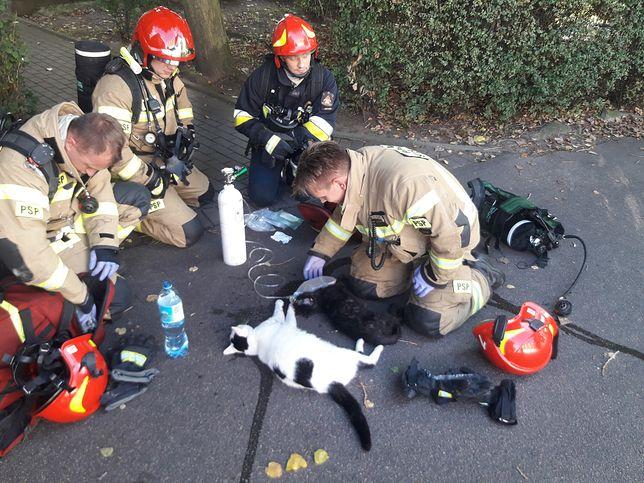 Gdynia. Bohaterska akcja strażaków