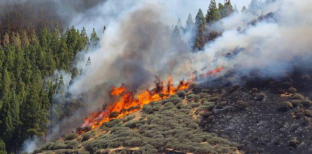 Gran Canaria. Ogromny pożar hiszpańskich lasów. Trwa walka z żywiołem