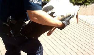 Policja ruszyła na ratunek rannemu bocianowi