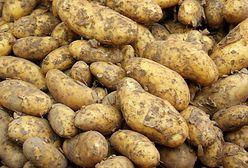 """Nie tylko krzywe buraki. Lidl kupuje """"nadprogramowe"""" ziemniaki"""