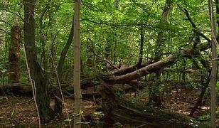 Osiedle w lesie. Wraca głośna sprawa. Co się tam dzieje? Niepokojące sygnały