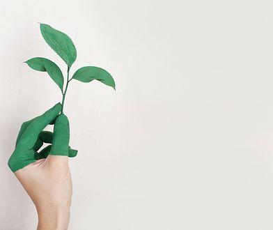 Ekowymagania znów podniosą koszt budowy domu