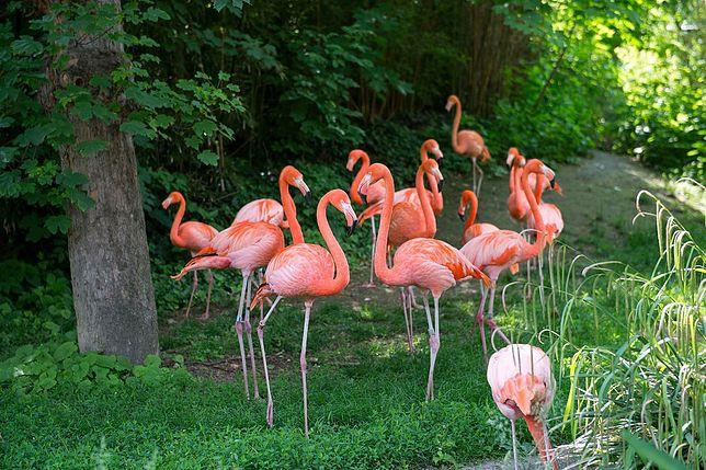 Najpiękniejsze ogrody zoologiczne świata. Zdecydowanie warto je odwiedzić