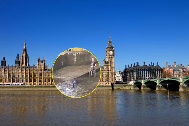 Tamiza, Londyn / zdjęcie ilustracyjne