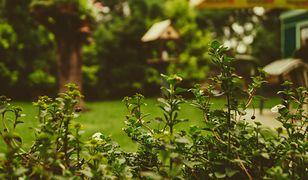 6 sposobów na oszczędności w ogrodzie. Różnicę zauważysz w portfelu
