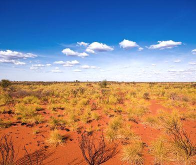 Ekstremalnie wysokie temperatury w Australii. Zapowiadany jest najgorętszy dzień w historii
