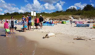 """""""Celebrytka"""" na plaży w Międzyzdrojach. Stała się miejscową atrakcją"""