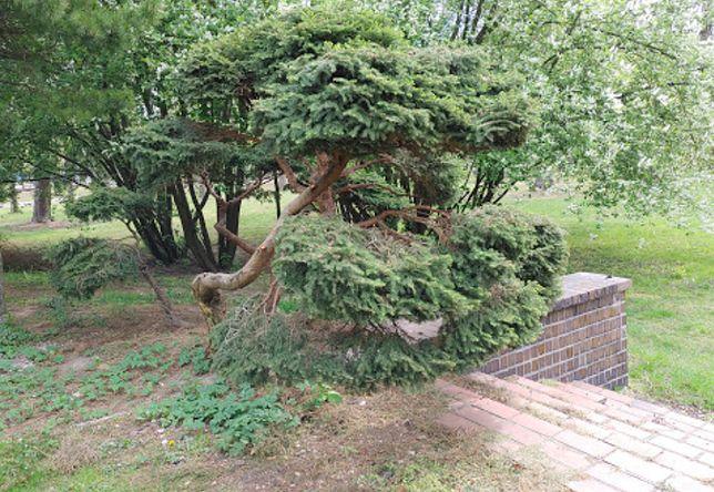 Warszawa. Kolejny zielony obszar przyrody w opresji. Stary park przy szpitalu geriatrycznym na Spartańskiej może zostać placem budowy, na którym wyrośnie nowe osiedle