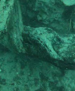 Naukowcy odkryli podwodny las. Liczy 60 tys. lat i skrywa wiele zagadek