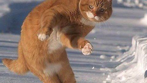 Dodatki do Shaun White Snowboarding