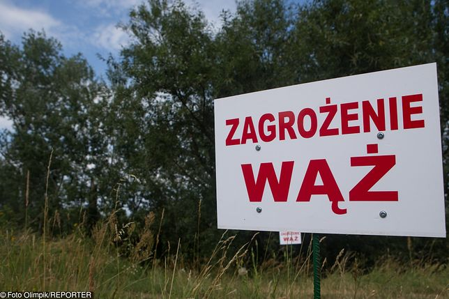 Na początku lipca nad Wisłą w okolicach Konstancina-Jeziornej znaleziono wylinkę węża