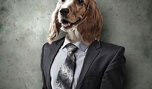 Traktuj swojego partnera jak psa – będziesz miała udany związek