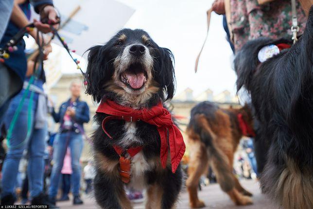 Warszawa. Sprawdź wysokość podatku od psa 2020. Na zdjęciu: Marsz Kundelków na ulicach stolicy, październik 2019 r.