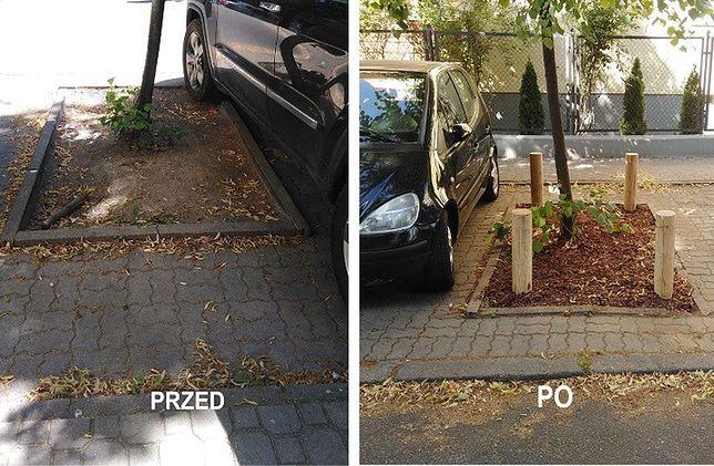 Montaż drewanianych bali ochraniających drzewa na ul. Sandomierskiej. Zdjęcie przed i po montażu. Fot. Urząd Dzielnicy Mokotów