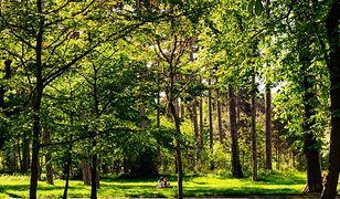 Zaskakujące badania. Naukowcy: tereny zielone wpływają na wyższe IQ u dzieci