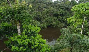 Unikalne lasy deszczowe Ameryki Południowej
