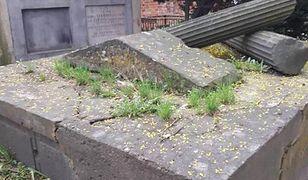 Grób bohaterki Powstania Warszawskiego zdewastowany, porośnięty trawą i popękany
