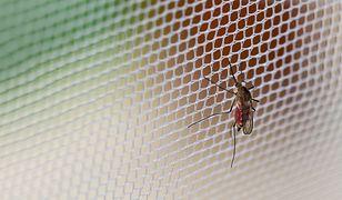 Moskitiera ma na tyle drobne otwory, że nie przejdzie przez nie nawet komar