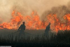 Ogromny pożar w Wielkopolsce. Spłonęły hektary zboża