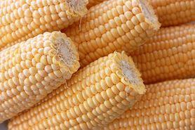 GMO - zalety, wady