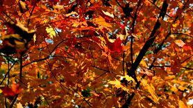 Jesienna łamigłówka. Znajdź słońce wśród liści (WIDEO)