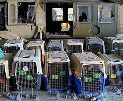 Amerykańscy żołnierze opuścili Kabul. Zostawili je na pastwę losu?