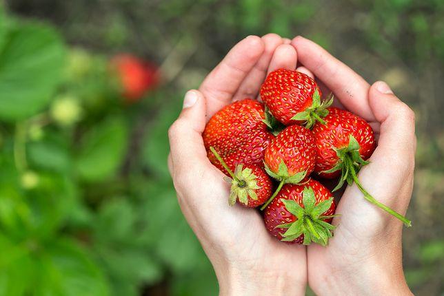 Trefne truskawki, które trafiły do Szwecji, pochodzą od trzech rolników z Wielkopolski i woj. lubuskiego.