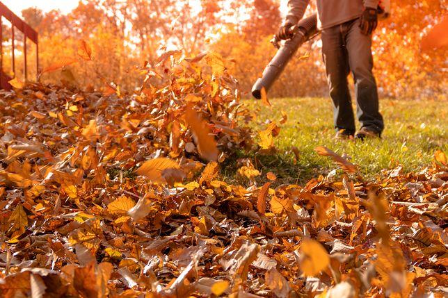 Jesień w ogrodzie wymaga sporego nakładu pracy