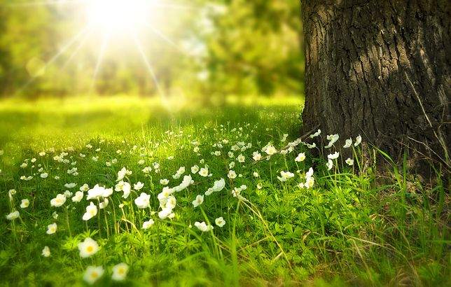 Sprawdzasz, czy wiosna zostanie na dłużej? W tych pogodowych aplikacjach czai się wirus