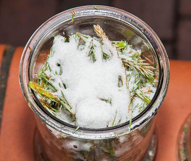 Lecznicze właściwości pędów sosny. Przygotuj domowy syrop