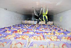 Afgańczycy w transporcie owoców do Polski. Cztery dni jedli tylko jabłka