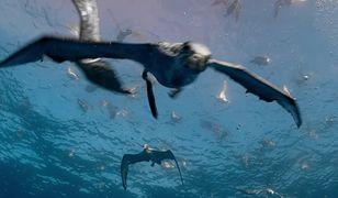 Burzyki korzystają z obecności delfinów w oceanie