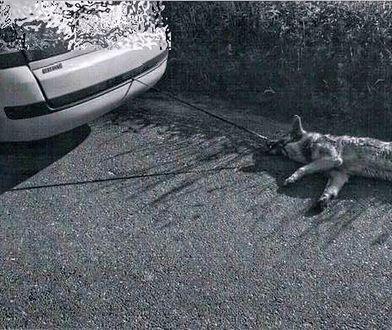 Zwierzę uratował mieszkaniec jednej z pobliskich wsi