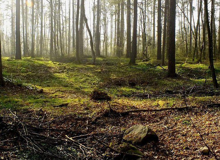 Ale znalezisko! Na Dolnym Śląsku odkryto zaginioną średniowieczną wieś